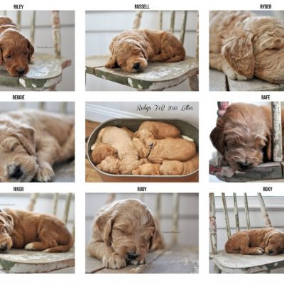 That time I got to be a Pet Photographer