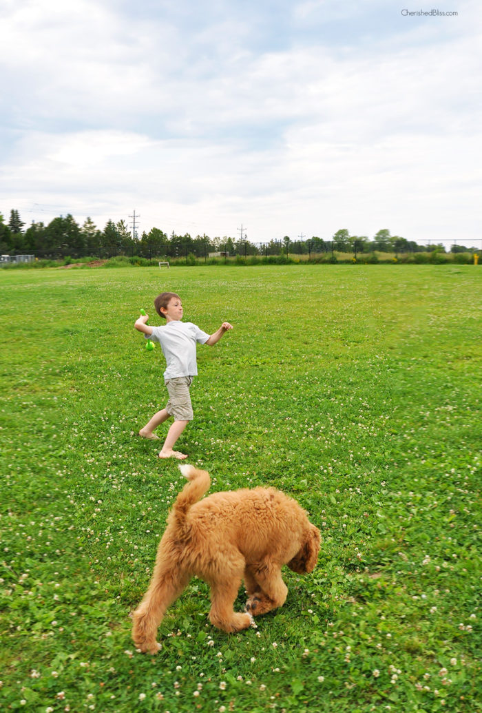 Tips on how to train your puppy at the dog park.