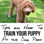 Tips on Training a Puppy at the Dog Park