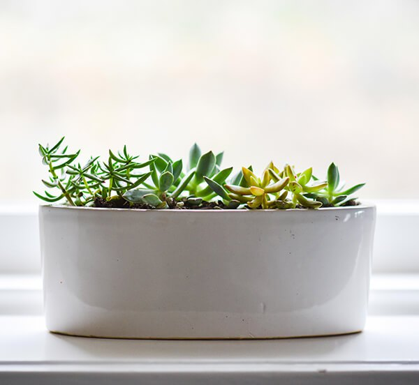 Succulents-in-a-planter-3-super-simple-steps-to-your-awesome-indoor-garden