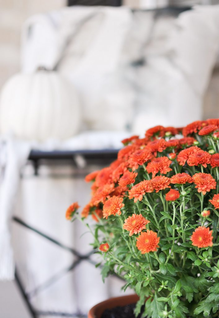 Create a Simple Fall Porch with a few flowers and white pumpkins. The perfect way to enjoy the season!