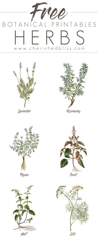 Free set of 6 spring herb printables cherished bliss for Print posters online cheap