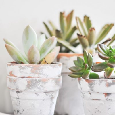 Coastal Terra Cotta Pots Tutorial