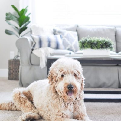 The Best Pet Proof Carpet for your Home