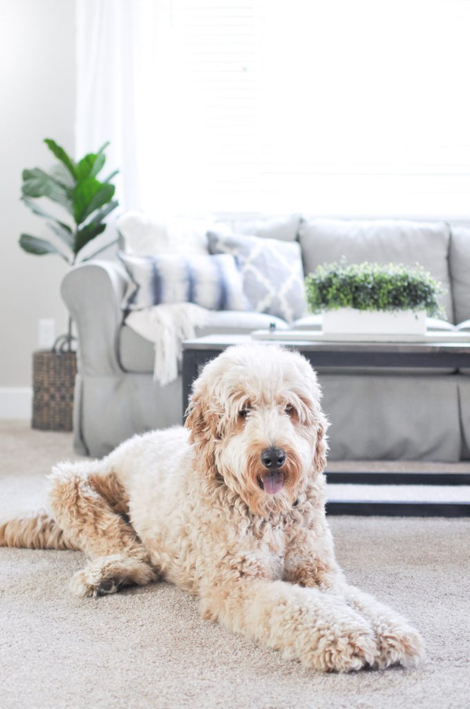 Are you looking for a new pet and family friendly carpet? The Pet Proof Carpet from the Life Proof Line at Home Depot is your answer to the toughest stains! #sponsored