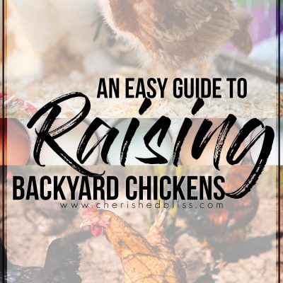 Easy Guide to Raising Backyard Chickens | Getting Started