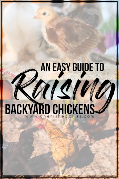 An Easy Guide to Raising Backyard Chickens