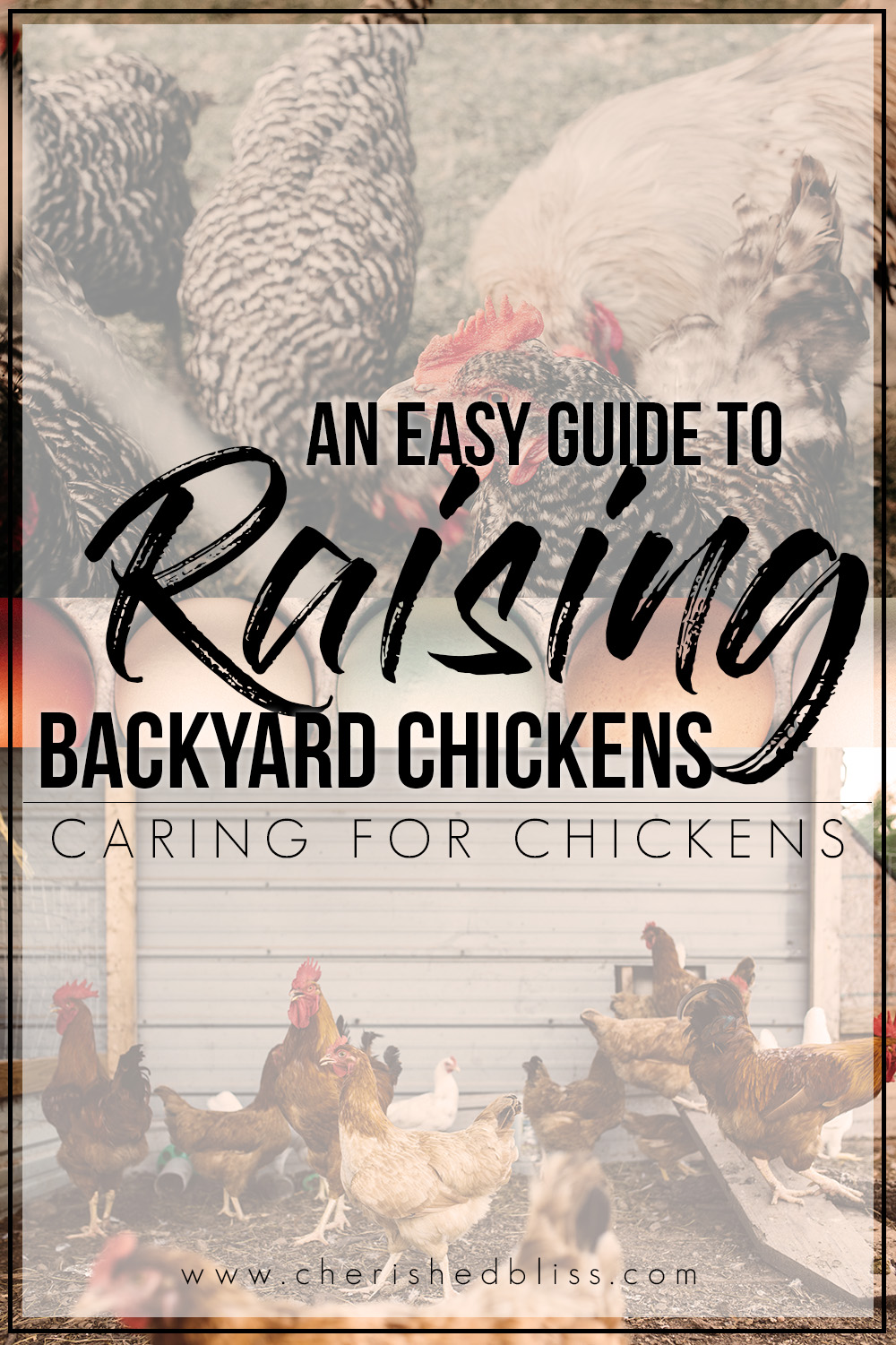 So you bought baby chicks?? This easy guide will take you through exactly how easy it is to Take Care of Chickens!