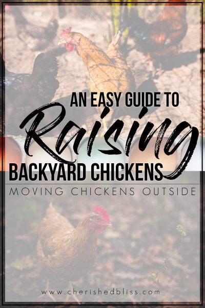 You've finally brought your chickens home and they are getting bigger. It's time to start Moving Chickens Outside! With these easy guide you will be able to make informed decisions on your next steps!