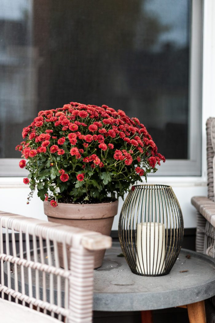Mums and candle on outdoor side table.