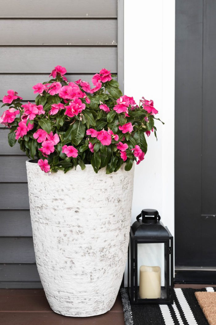 White Planter with pink summer flowers next to front door.